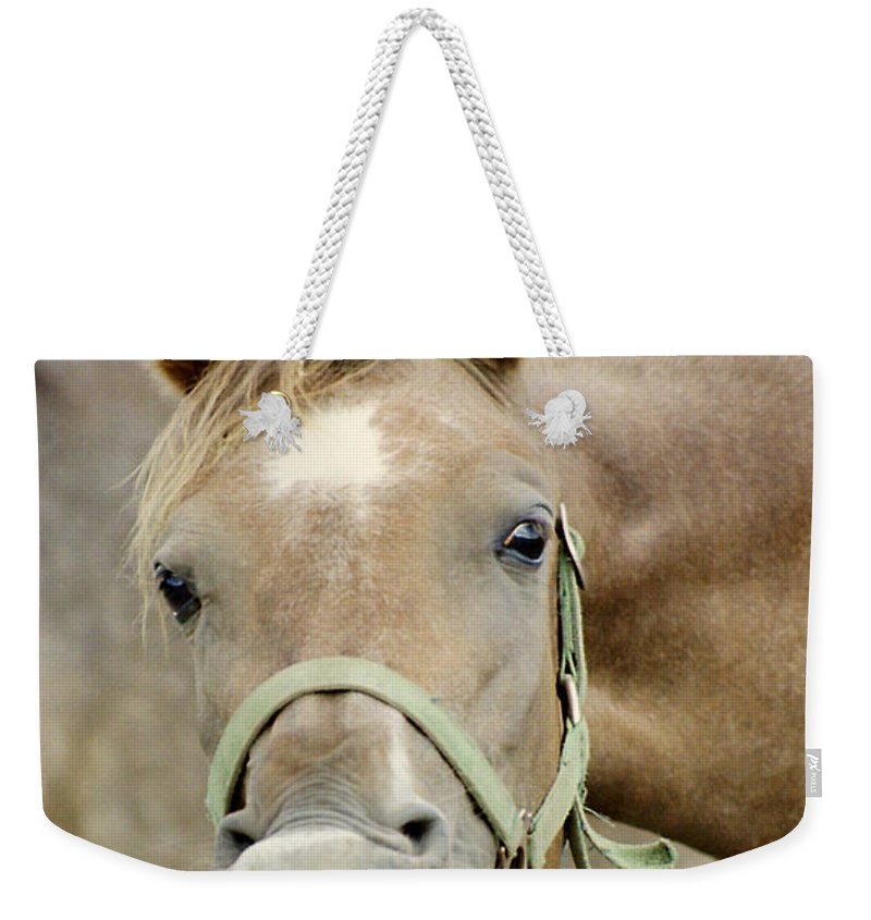 Horse Weekender Tote Bag featuring the photograph Say Cheese by Angel Ciesniarska