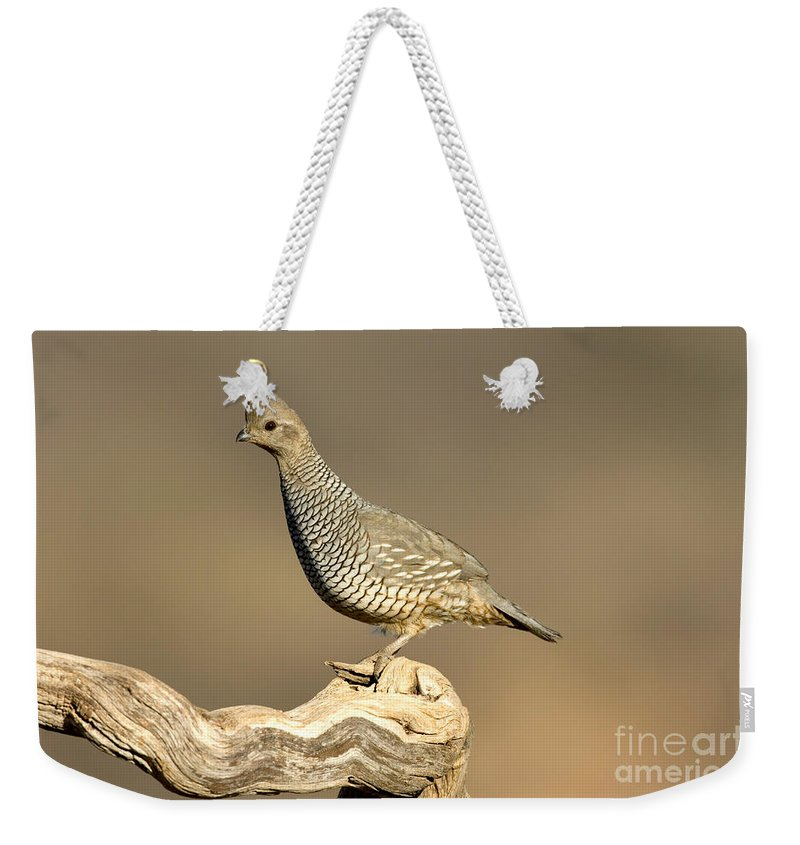 Animal Weekender Tote Bag featuring the photograph Scaled Quail Callipepla Squamata by Anthony Mercieca