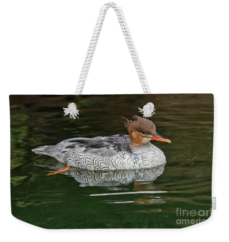 Anatidae Weekender Tote Bag featuring the photograph Scaly-sided Merganser Female by Anthony Mercieca