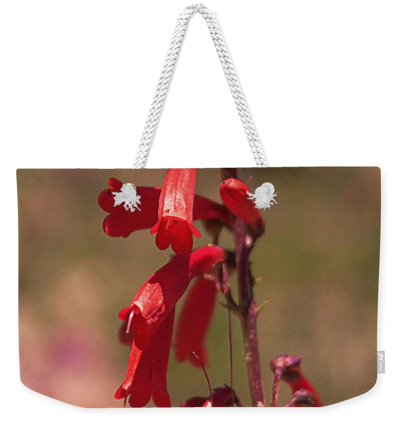 Scarlet Weekender Tote Bag featuring the photograph Scarlet Colorado Penstemons by Janice Pariza