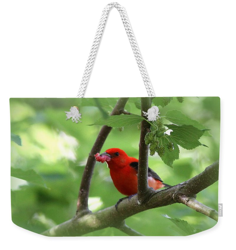 Scarlet Tanager Weekender Tote Bag featuring the photograph Scarlet Tanager - Fallout by Travis Truelove