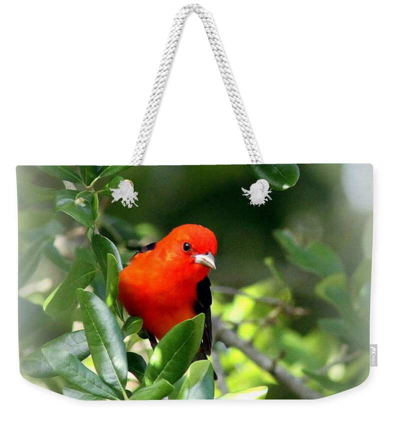 Scarlet Tanager Weekender Tote Bag featuring the photograph Scarlet Tanager by Travis Truelove