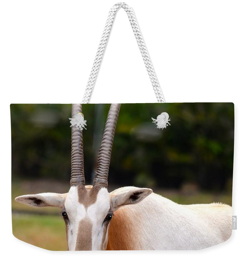 Oryx Weekender Tote Bag featuring the photograph Scimitar Horned Oryx 2 by Richard Bryce and Family
