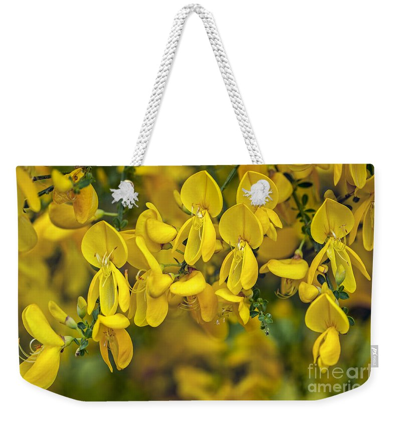 Common Broom Weekender Tote Bag featuring the photograph Scotch Broom 3 by Arterra Picture Library