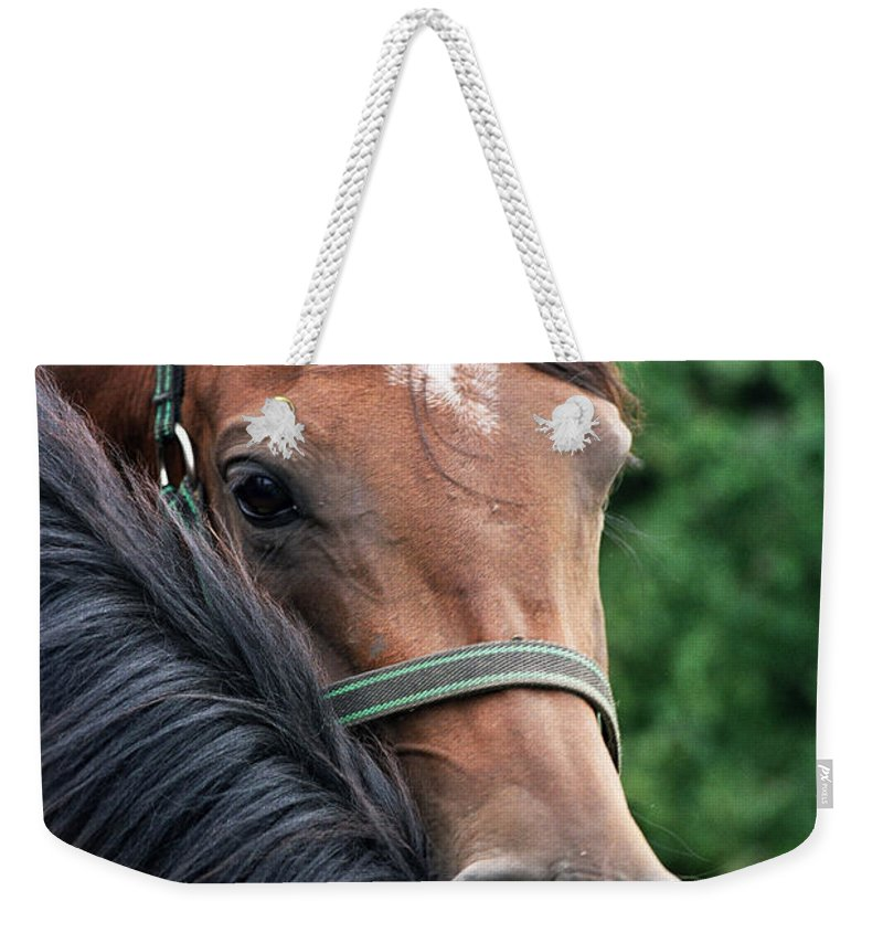 Horse Portrait Weekender Tote Bag featuring the photograph Scratch My Back by Angel Ciesniarska