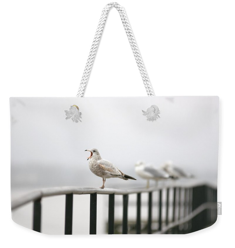 Animal Weekender Tote Bag featuring the photograph Screaming Seagull by Alex Grichenko