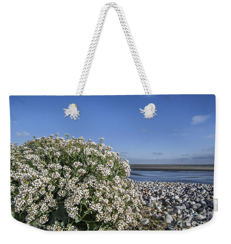 Sea Kale Weekender Tote Bag featuring the photograph Sea Kale 6 by Arterra Picture Library