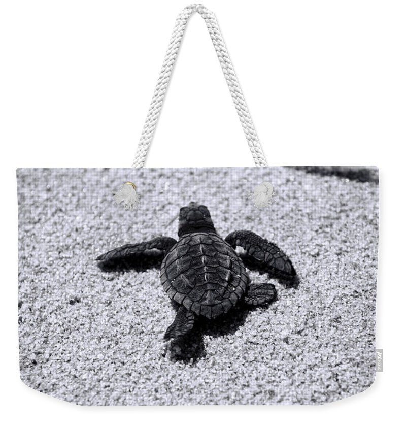 Baby Loggerhead Weekender Tote Bag featuring the photograph Sea Turtle by Sebastian Musial