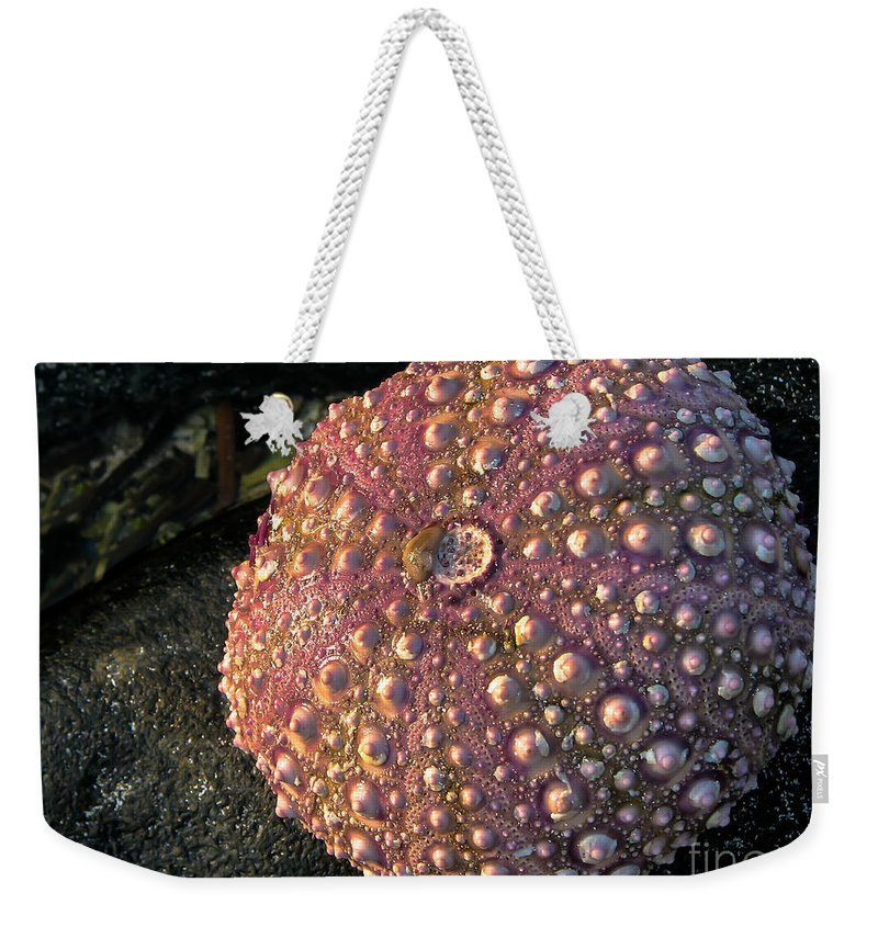 Maco Weekender Tote Bag featuring the photograph Sea Urchins by Robert Bales