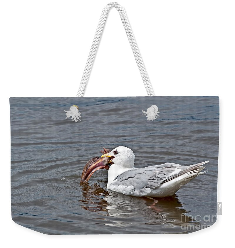 Seagull Weekender Tote Bag featuring the photograph Seagull Eating Huge Fish In Water Art Prints by Valerie Garner