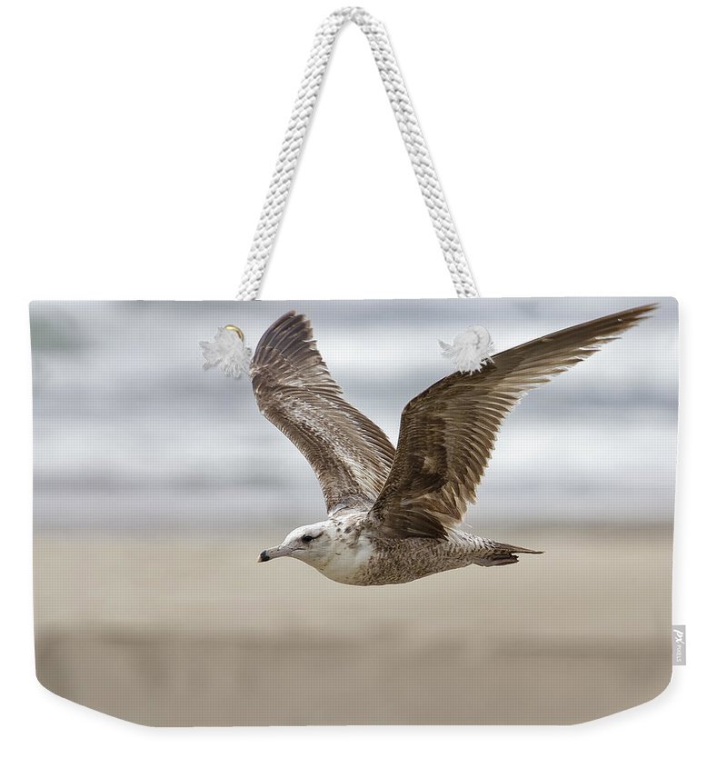 Seagull Weekender Tote Bag featuring the photograph Seagull In Flight by Belinda Greb