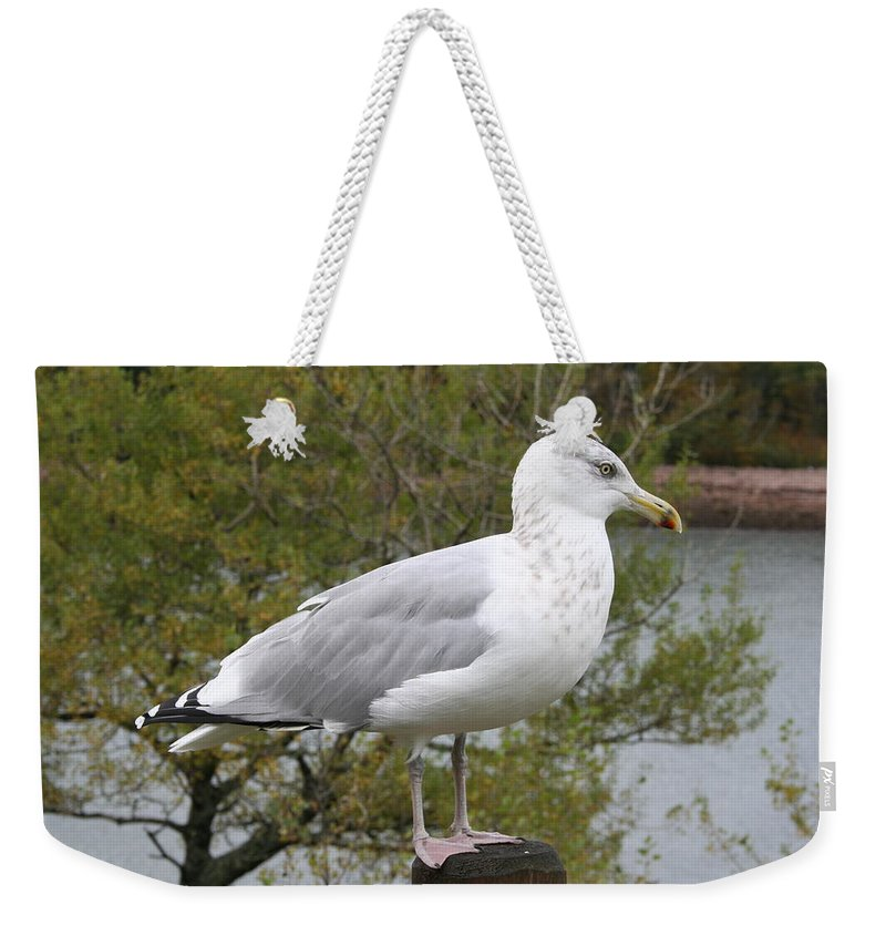 Seagull Weekender Tote Bag featuring the photograph Seagull Outlook by Christiane Schulze Art And Photography