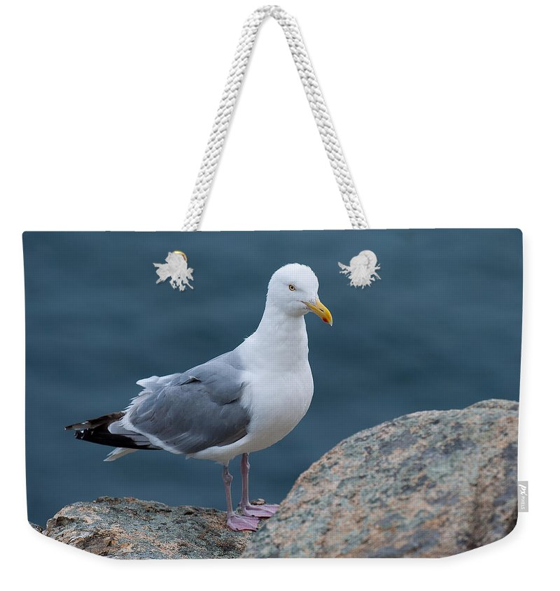 Acadia National Park Weekender Tote Bag featuring the photograph Seagull by Sebastian Musial