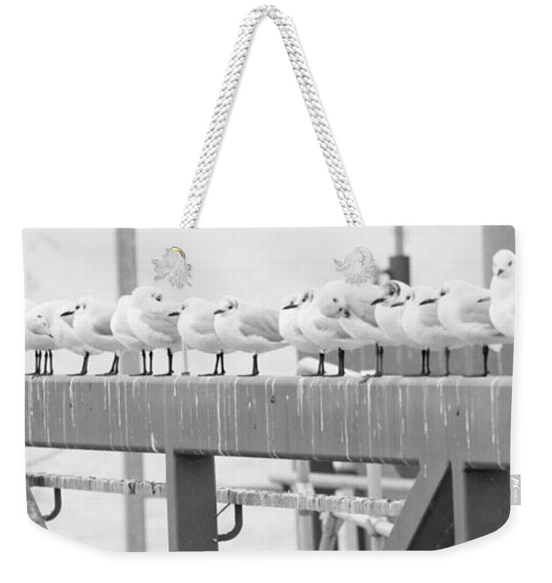 Birds Weekender Tote Bag featuring the photograph Seagulls In A Row by Chevy Fleet