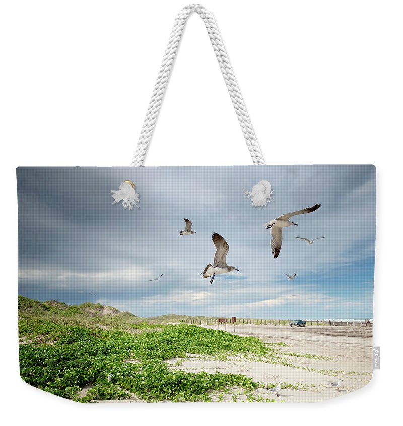 Scenics Weekender Tote Bag featuring the photograph Seagulls In Flight At North Padre by Olga Melhiser Photography