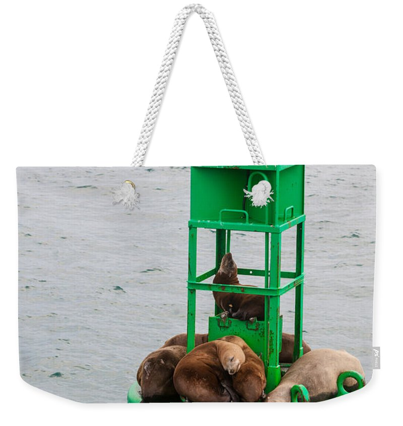 Seal Weekender Tote Bag featuring the photograph Seal Nap Time by Scott Campbell