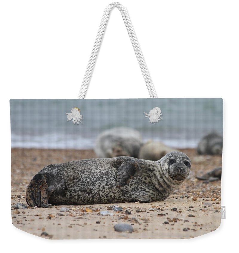 Seal Weekender Tote Bag featuring the photograph Seal Pup On Beach by Gordon Auld