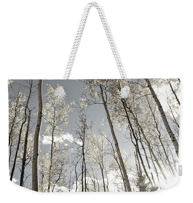 Contemporary Weekender Tote Bag featuring the photograph Silver Birch by Alanna DPhoto