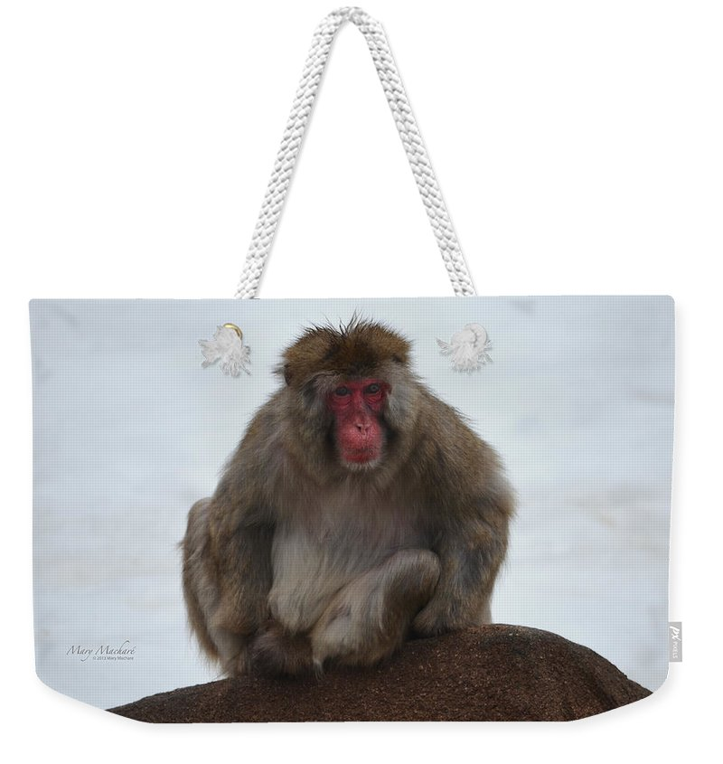 Japanese Macaque Weekender Tote Bag featuring the photograph Seated Macaque Snow Monkey by Mary Machare