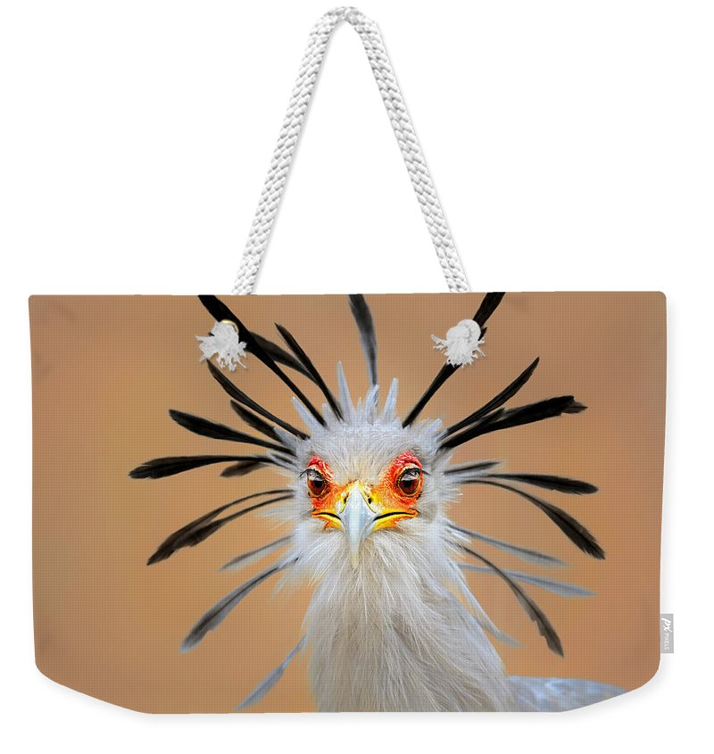 Bird Weekender Tote Bag featuring the photograph Secretary Bird Portrait Close-up Head Shot by Johan Swanepoel