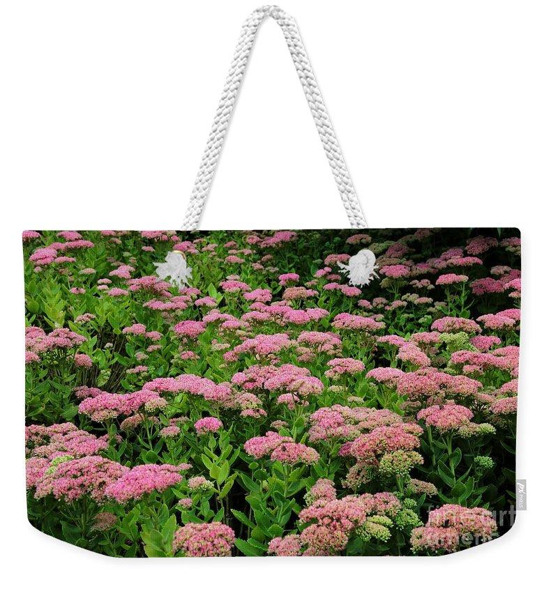 Sedum Weekender Tote Bag featuring the photograph Sedum Garden by Carol Groenen