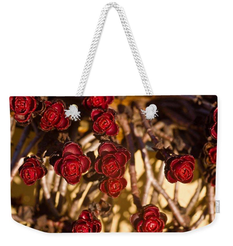 Flowering Weekender Tote Bag featuring the photograph Sedum Rosettes 1 by Douglas Barnett