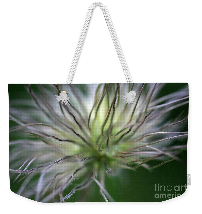 Botany Weekender Tote Bag featuring the photograph Seed Head by Deborah Benbrook