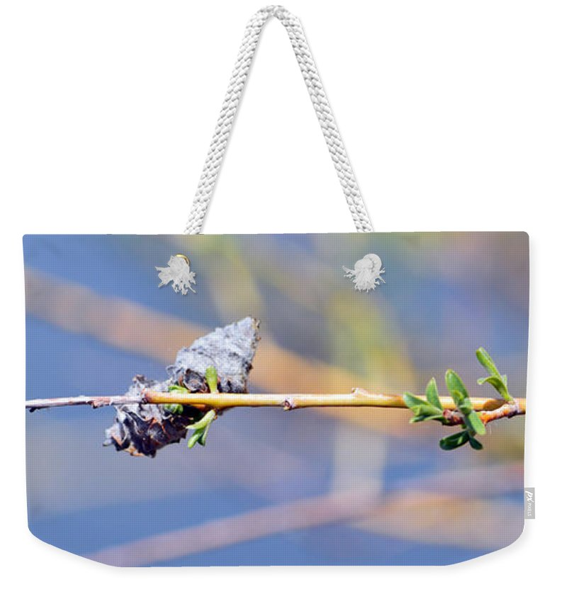 Branch Weekender Tote Bag featuring the photograph Seed Pods by Brent Dolliver