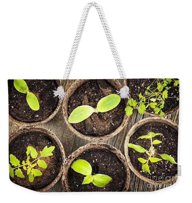 Seedlings Weekender Tote Bag featuring the photograph Seedlings Growing In Peat Moss Pots by Elena Elisseeva