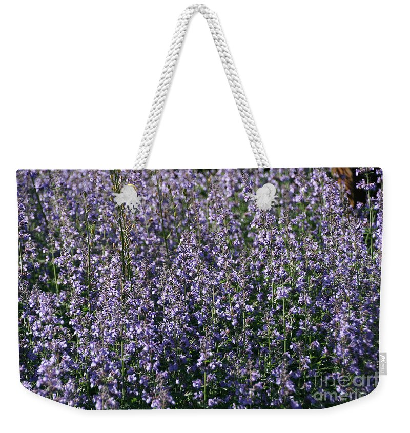 Flower Weekender Tote Bag featuring the photograph Seeing Lavender by Susan Herber