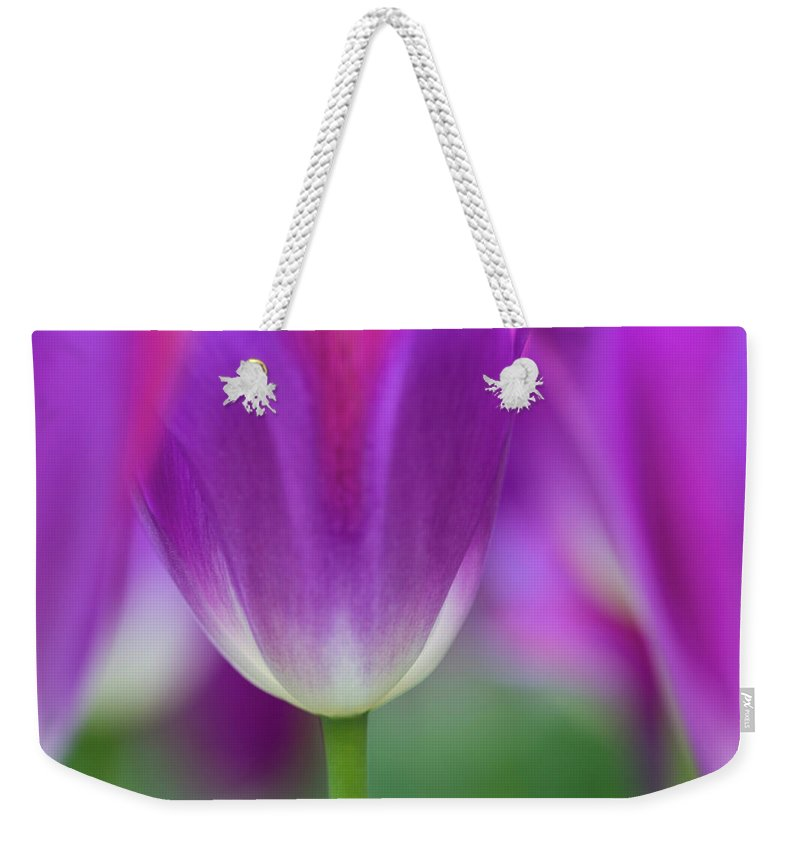 Purple Weekender Tote Bag featuring the photograph Selective Focus On Tulip Kuekenhof by Darrell Gulin