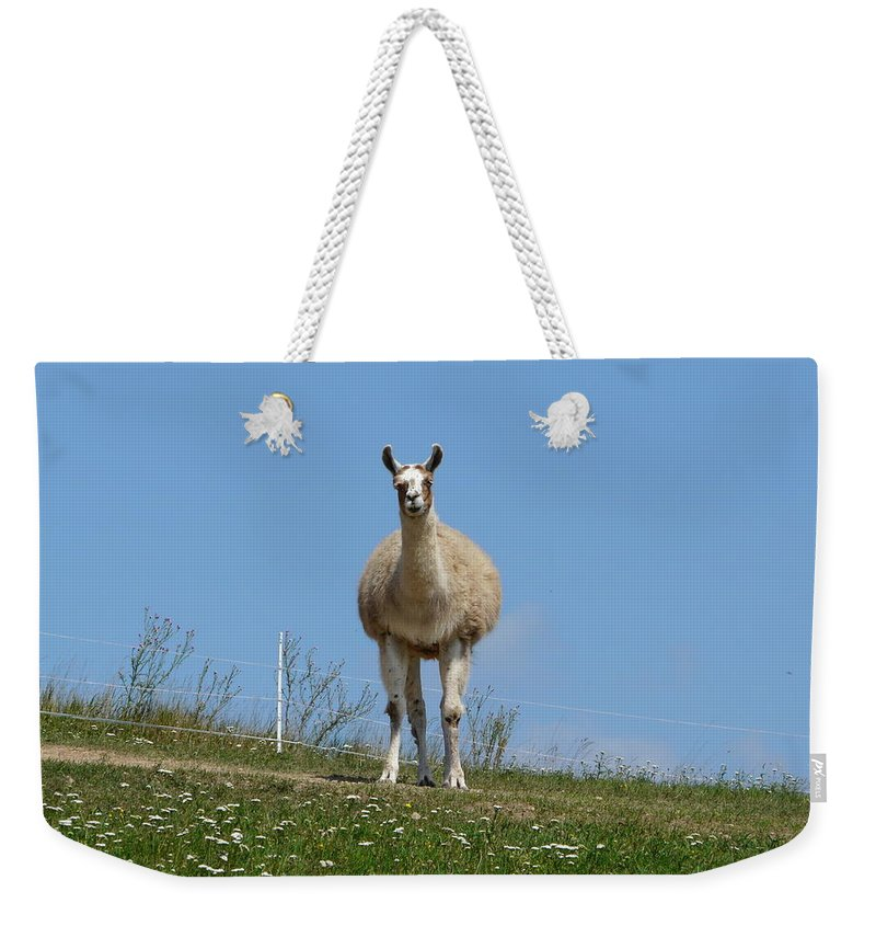 Lama Weekender Tote Bag featuring the photograph Sentinel by Valerie Ornstein