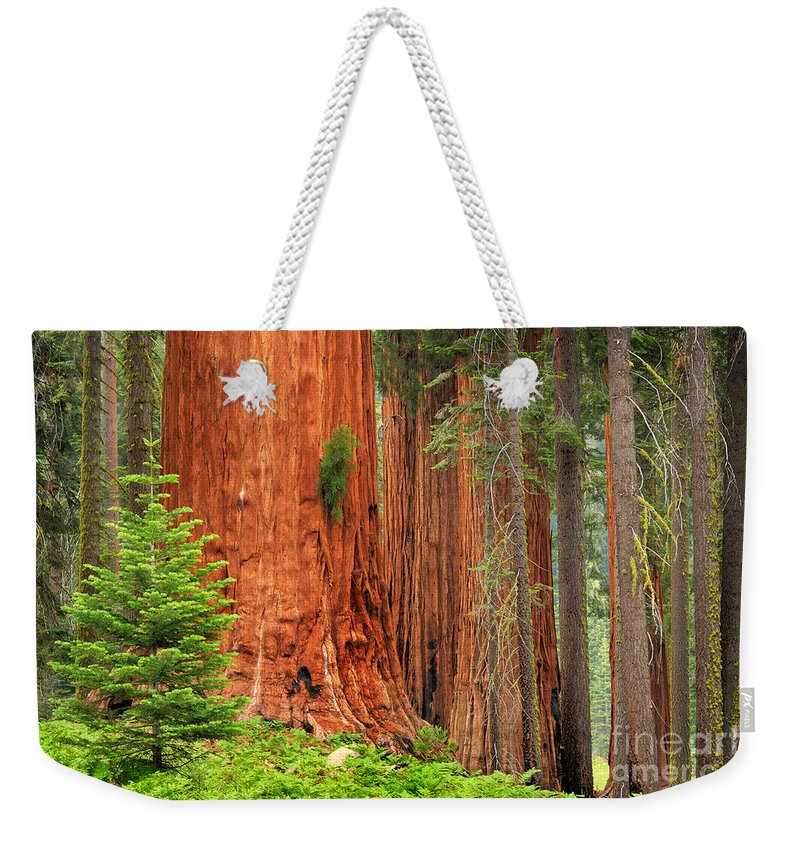 America Weekender Tote Bag featuring the photograph Sequoias by Inge Johnsson