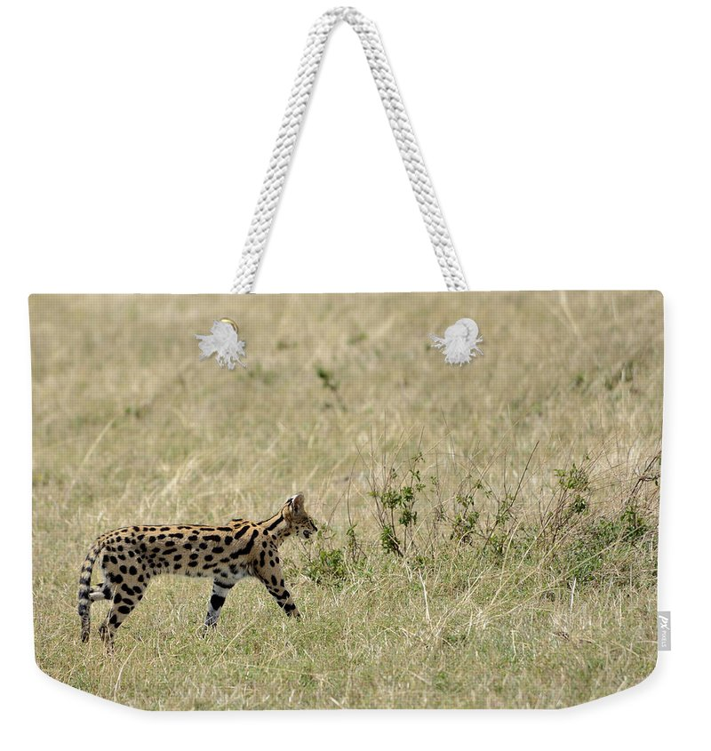 Serval Weekender Tote Bag featuring the photograph Serval Hunting by Ian Ashbaugh