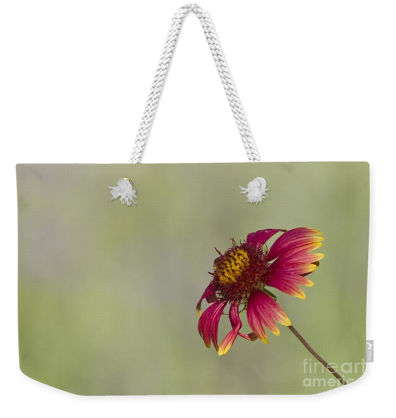Flower Weekender Tote Bag featuring the photograph Shades Of Beauty by Bryan Keil