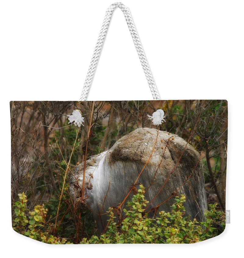 Nature Weekender Tote Bag featuring the photograph Shaggy Dog by Donna Blackhall