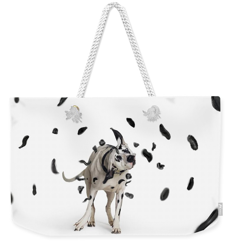 Pets Weekender Tote Bag featuring the photograph Shake The Spots Off by Gandee Vasan