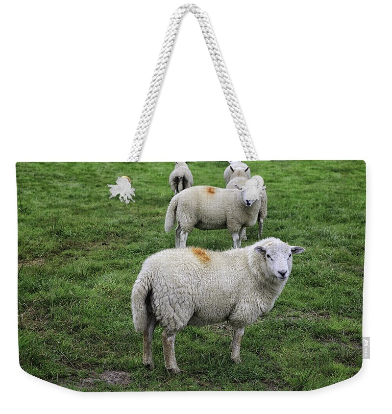Wales Weekender Tote Bag featuring the photograph Sheep On Parade by Fran Gallogly