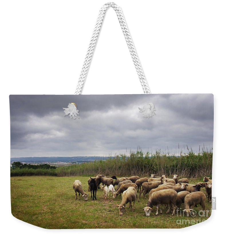 Agriculture Weekender Tote Bag featuring the photograph Sheep Pasturing by Carlos Caetano