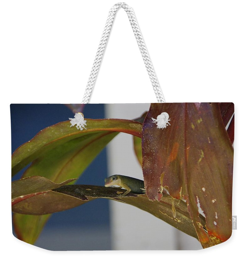 Gecko Weekender Tote Bag featuring the photograph She's A Beauty by Marilyn Wilson
