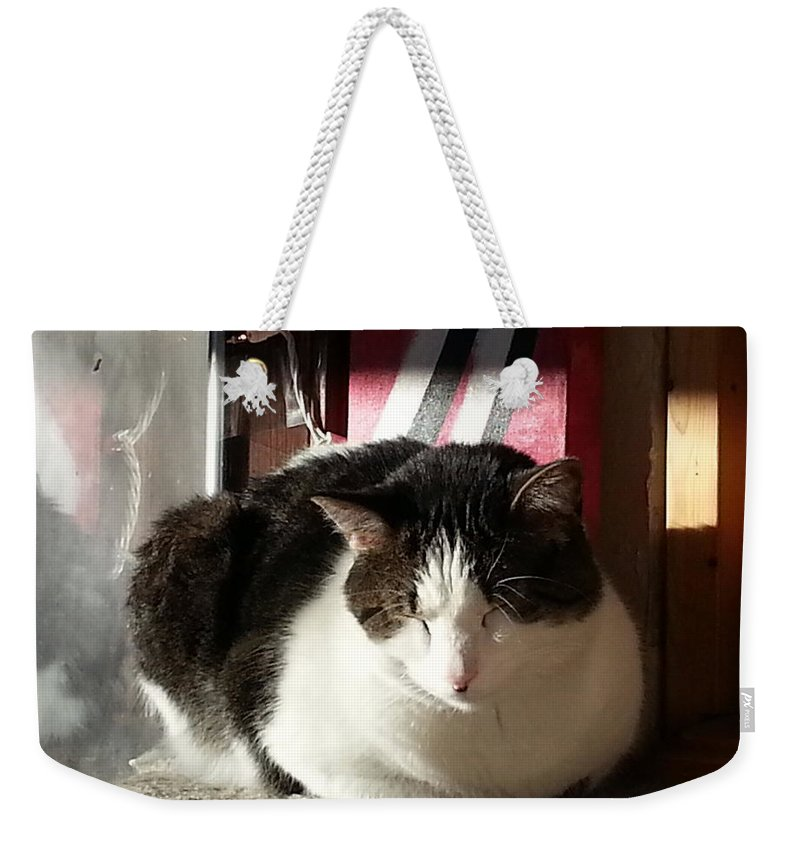 Cat Weekender Tote Bag featuring the photograph Shhh by Caryl J Bohn