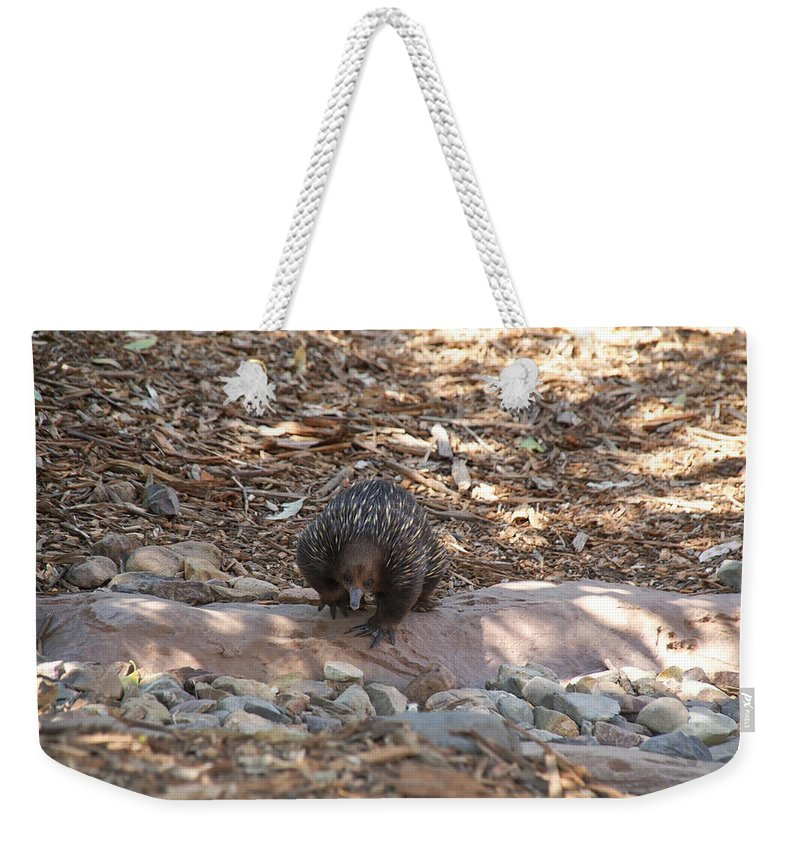 Australia Queensland Qld Weekender Tote Bag featuring the digital art Short-beaked Echidna by Carol Ailles