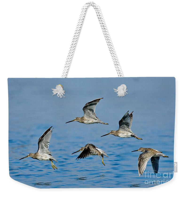Short-billed Dowitcher Weekender Tote Bag featuring the photograph Short-billed Dowitchers In Flight by Anthony Mercieca