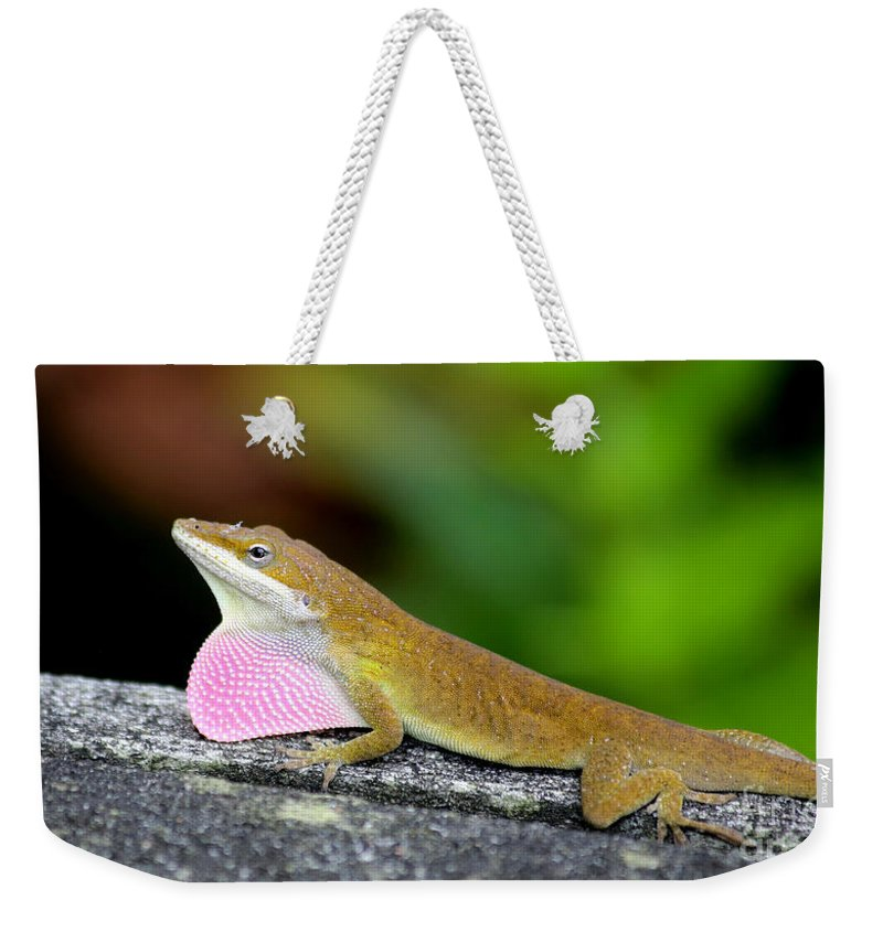 Lizzard Weekender Tote Bag featuring the photograph Showing Off by Marty Fancy