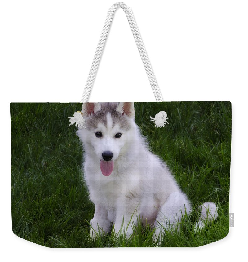Siberian Weekender Tote Bag featuring the photograph Siberian Huskie Pup by Bill Cannon