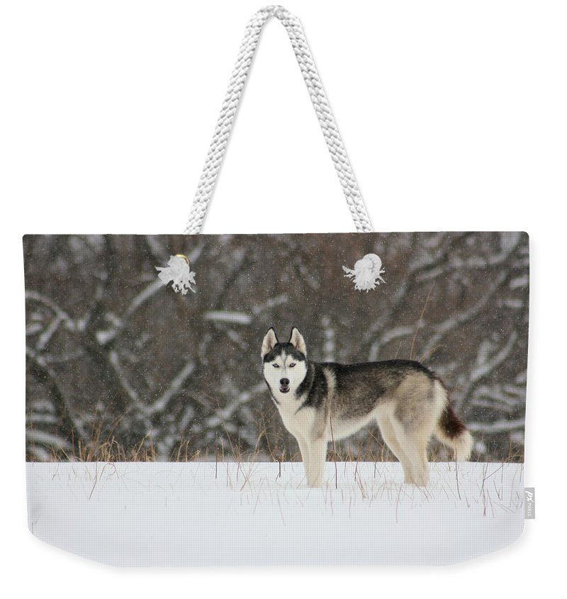 Landscape Weekender Tote Bag featuring the photograph Siberian Husky 20 by David Dunham