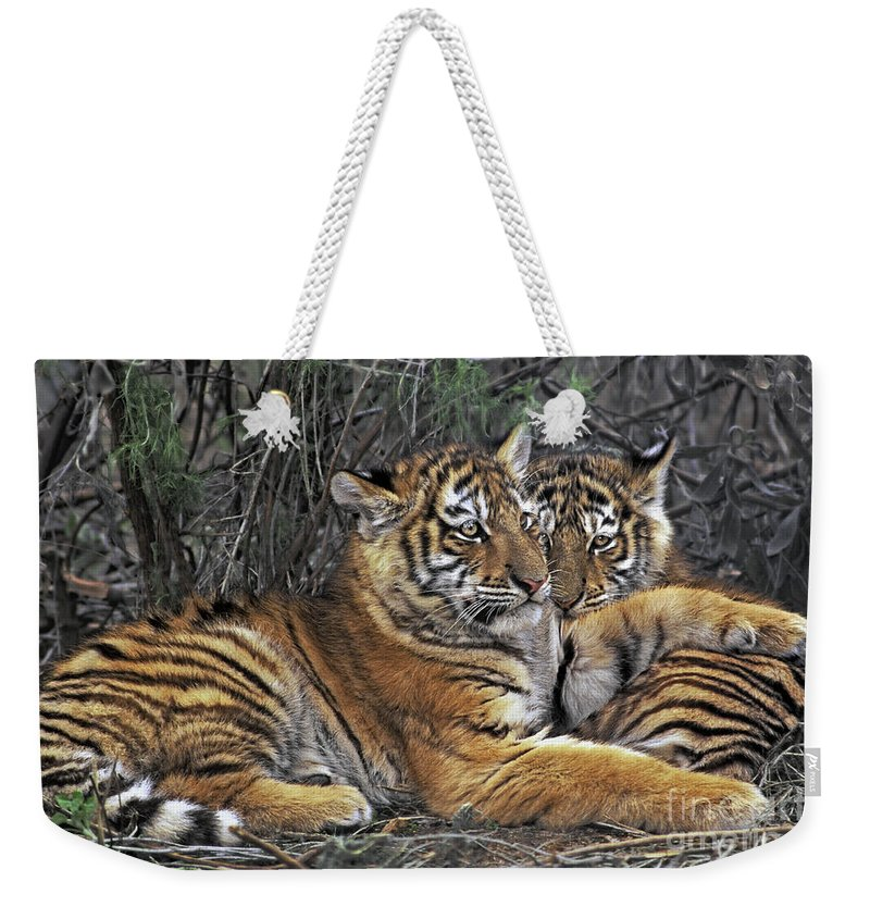 Siberian Tiger Weekender Tote Bag featuring the photograph Siberian Tiger Cubs Endangered Species Wildlife Rescue by Dave Welling