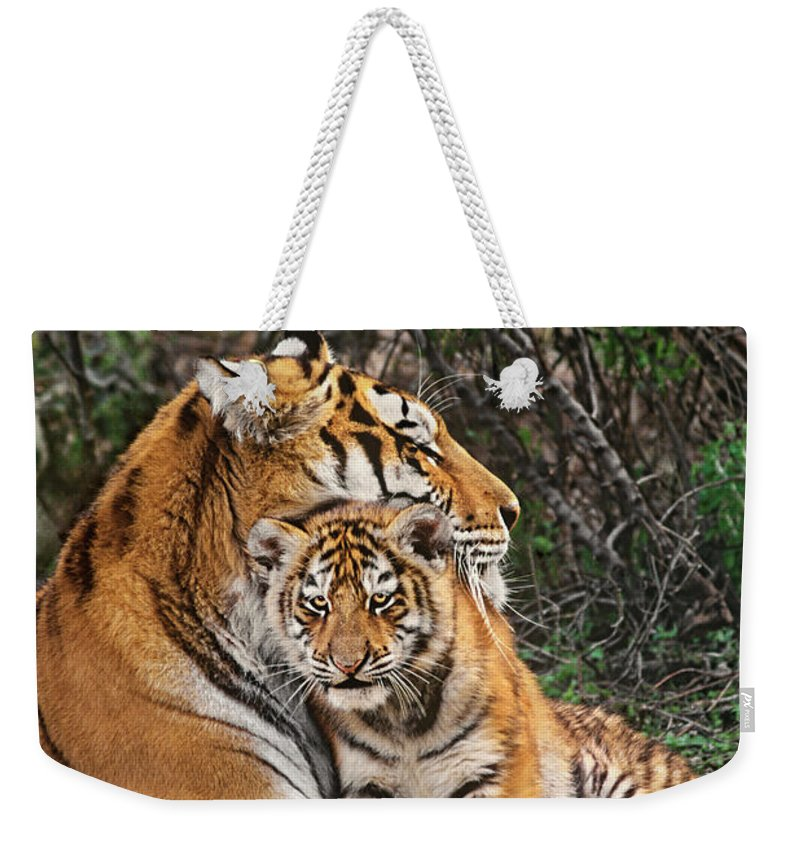 Siberian Tiger Weekender Tote Bag featuring the photograph Siberian Tiger Mother And Cub Endangered Species Wildlife Rescue by Dave Welling