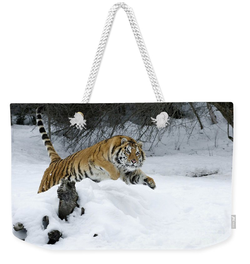 Tiger Weekender Tote Bag featuring the photograph Siberian Tiger by Sandra Bronstein