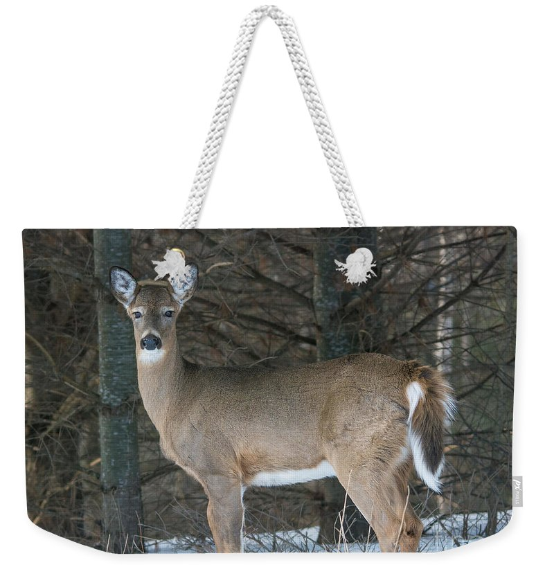Landscape Weekender Tote Bag featuring the photograph Side Of The Road Deer by Cheryl Baxter